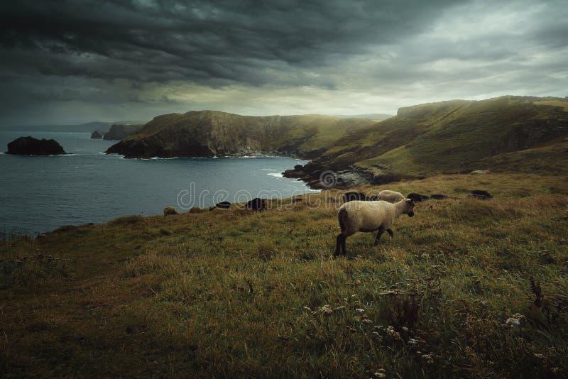 Drastische Wolken über Cornwall-Küste stockfotografie