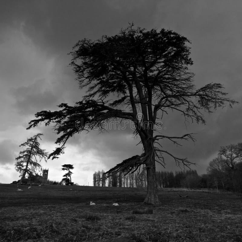 Drastischer Himmel vor Hagelwetter lizenzfreie stockfotos