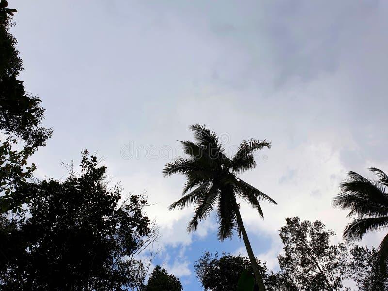 Drastischer Hintergrund des Himmels und der Wolken mit B?umen, Himmelhintergrund stockbilder