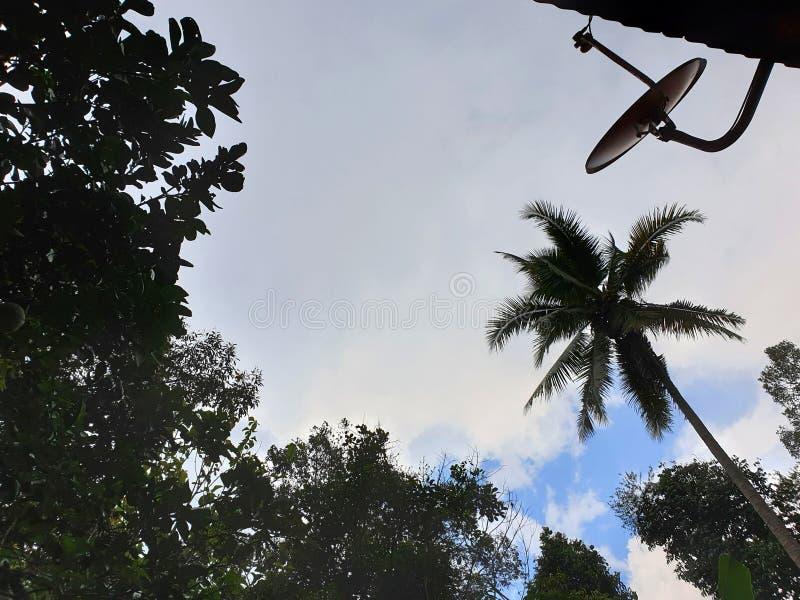 Drastischer Hintergrund des Himmels und der Wolken mit B?umen, Himmelhintergrund lizenzfreie stockfotografie