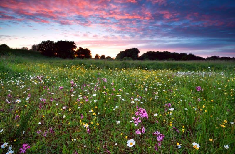 Drastischer Sommersonnenuntergang über blühender Wiese lizenzfreie stockfotografie