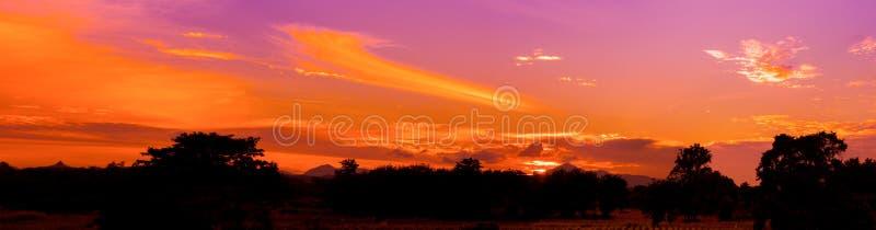 Drastischer Sonnenuntergang des Panoramas in schönem buntem des Himmels, das Schattenbildbaumwalddämmerungs-Zeitesprit der Sonne  lizenzfreies stockbild