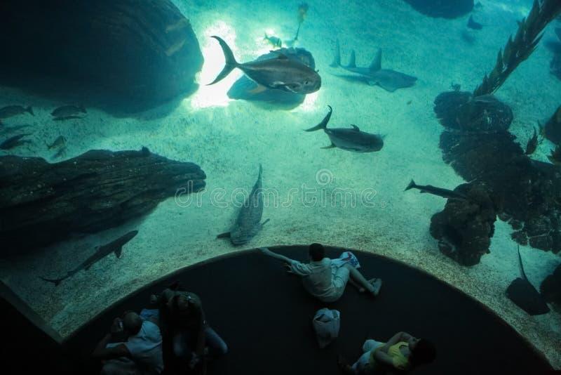 Draufsicht über aufpassende Fische der Gruppe von Personen stockfoto