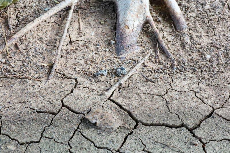 Draufsicht, Baumwurzeln und Boden, Dürre, Sprünge im Sommer, Bilder für Hintergrund lizenzfreies stockfoto