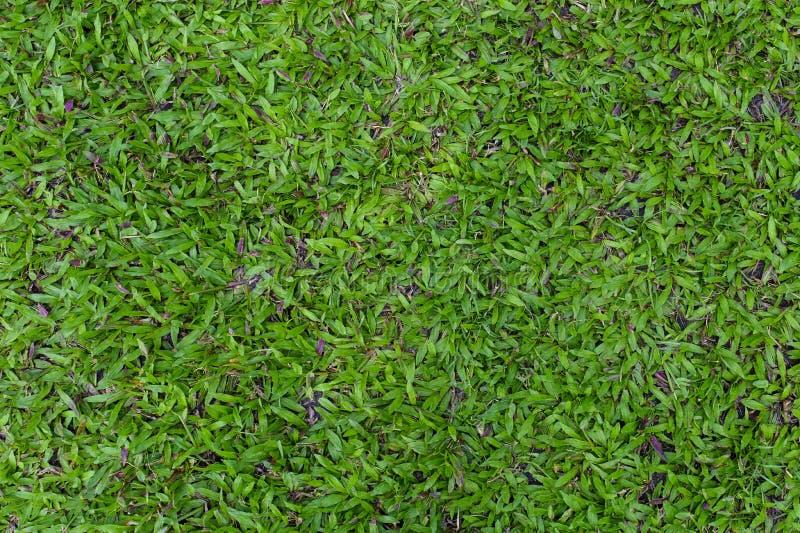 Draufsicht der gr?nes Gras-Beschaffenheit stockbilder
