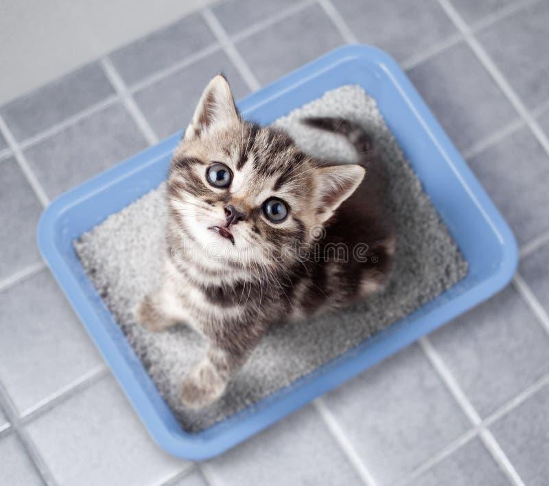 Draufsicht der Katze, die im Katzenklo auf Badezimmerboden sitzt lizenzfreie stockbilder