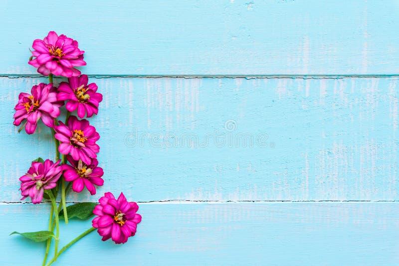 Draufsicht der rosa Doppelklickkosmosblume stockbild