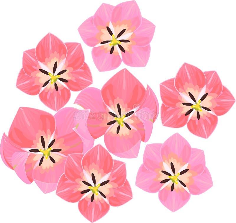 Draufsicht der Tulpe lizenzfreie abbildung