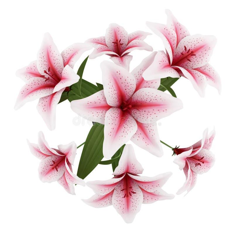 Draufsicht Des Blumenstraußes Der Rosa Lilien Getrennt Auf Weiß ...