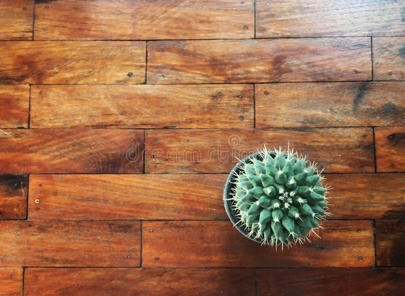 Draufsicht des grünen einzelnen Kaktus im Plastiktopf auf Holztisch lizenzfreies stockfoto