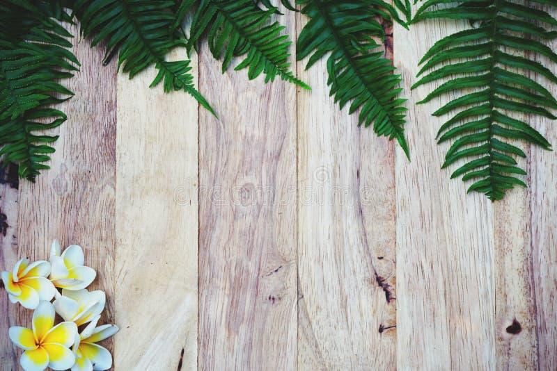 Draufsicht des grünen Farn- und Blumenbeschaffenheitsdetailhintergrundes, Badekurortdekorations-Hintergrundkonzept lizenzfreie stockbilder
