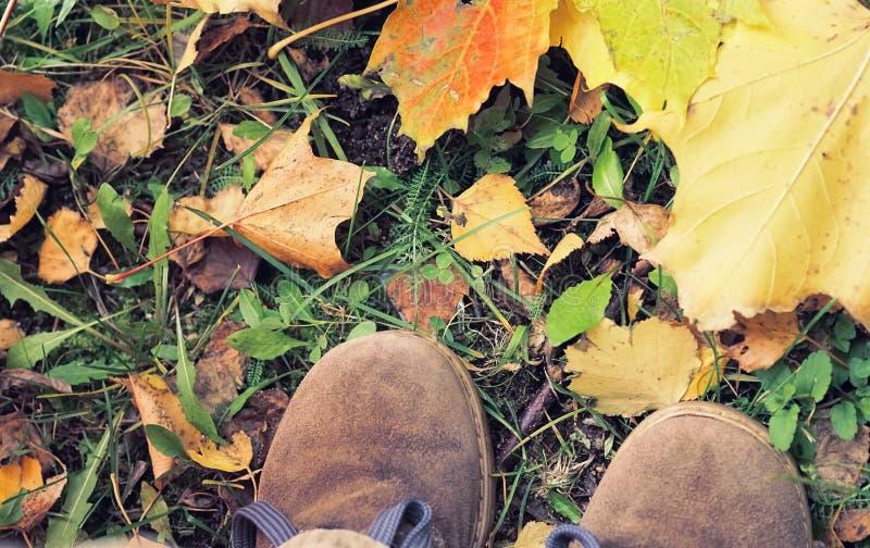 Draufsicht des Kind-` s, das den Schuh tritt auf Blätter, für Themen des Herbstes, Erholung, Erforschung wandert lizenzfreie stockbilder