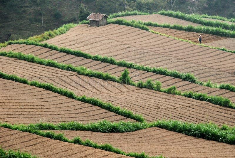 Draufsicht des Landwirtschaftsfeldes lizenzfreie stockfotografie