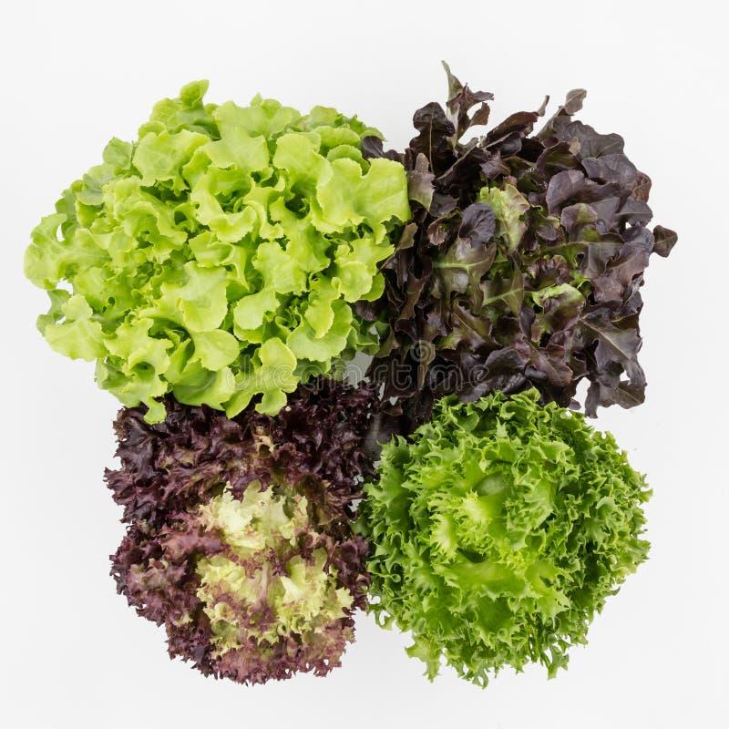 Draufsicht des Mischungs-Salats lässt Hintergrund lizenzfreie stockfotografie