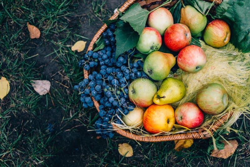 Draufsicht des Satzes für Herbstpicknick: Äpfel und Trauben in einem Weidenkorb, gesundes Lebensmittel stockbild