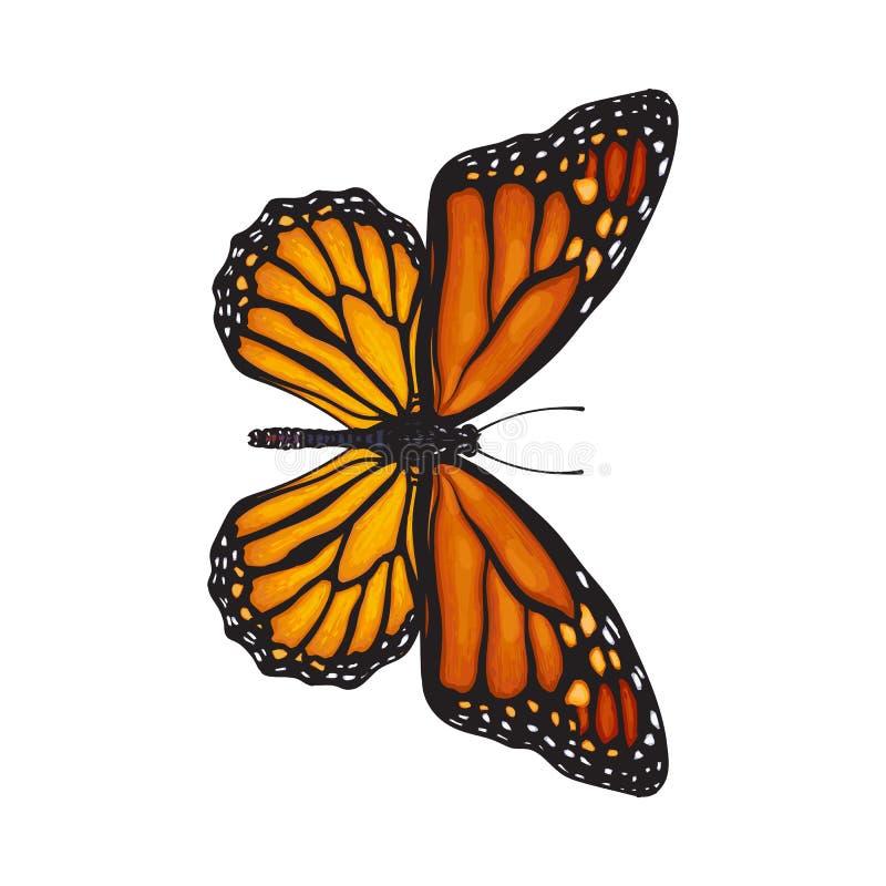 Draufsicht des schönen Monarchfalters, lokalisierte Skizzenartillustration vektor abbildung