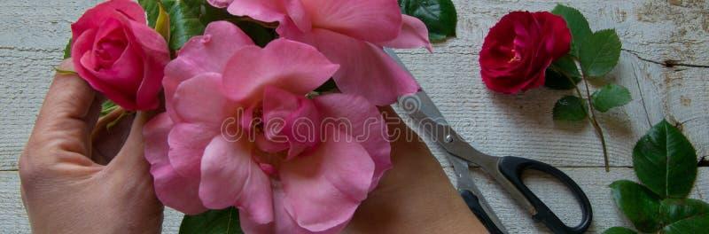 Draufsicht des weiblichen Dekorateurs Rosen auf dem Holztisch, Konzepte vereinbarend - fiorist, Besetzung, Hobby stockfotografie