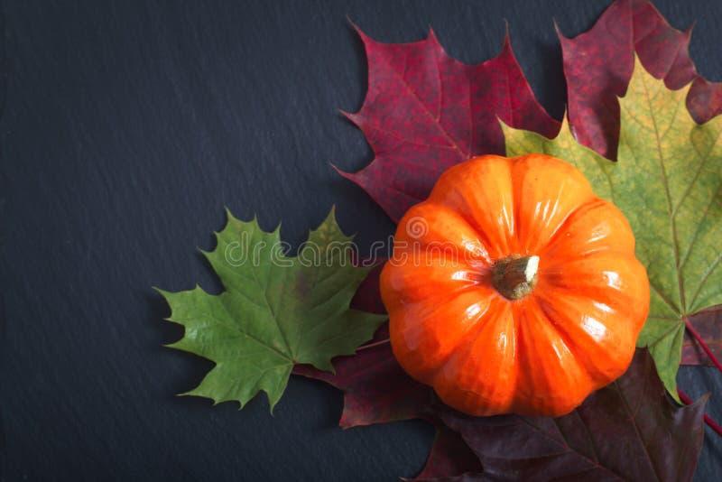 Draufsicht Kürbis auf Herbstlaub auf schwarzem Schieferstein für Jahreszeit oder Halloween-Feiertagshintergrund lizenzfreies stockfoto