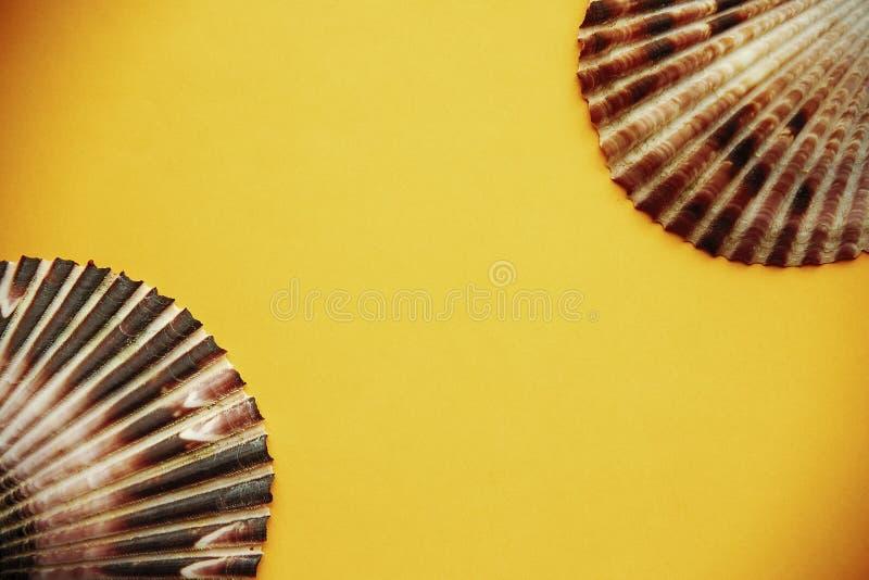 Draufsicht Shells lizenzfreie stockfotos