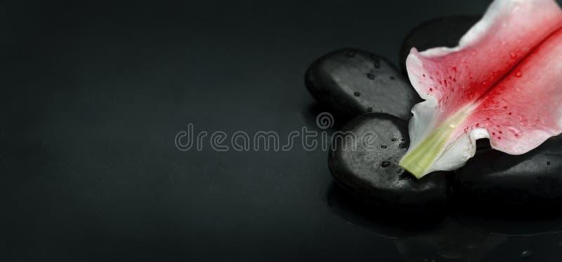 Draufsicht von Badekurortsteinen und von Blumenblumenblatt über schwarzem Hintergrund stockbild