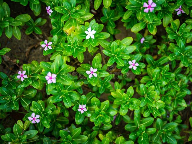 Draufsicht von Blumen und von grünen Blatthintergründen lizenzfreies stockbild