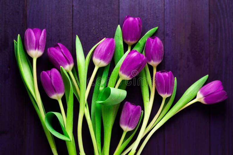 Draufsicht von purpurroten Tulpen auf hölzernem purpurrotem Hintergrund lizenzfreie stockfotos