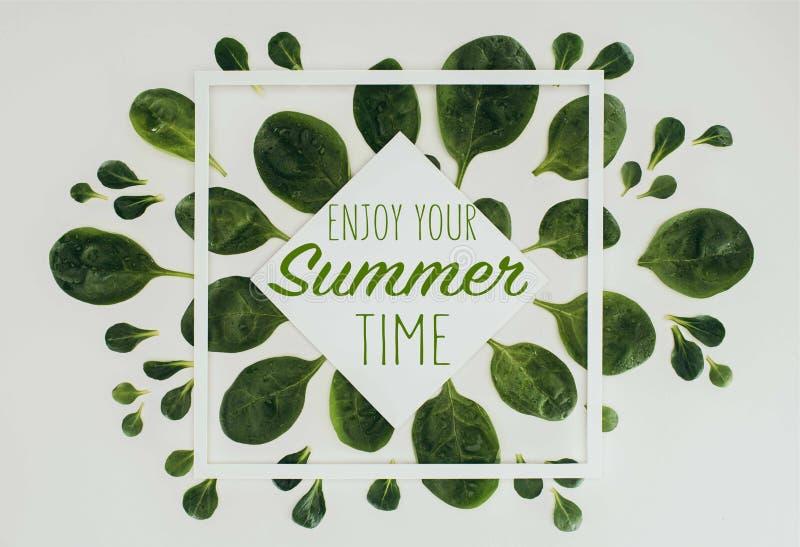 Draufsicht von schönen frischen grünen Blättern mit Wörtern genießen Ihre Sommerzeit lizenzfreie abbildung