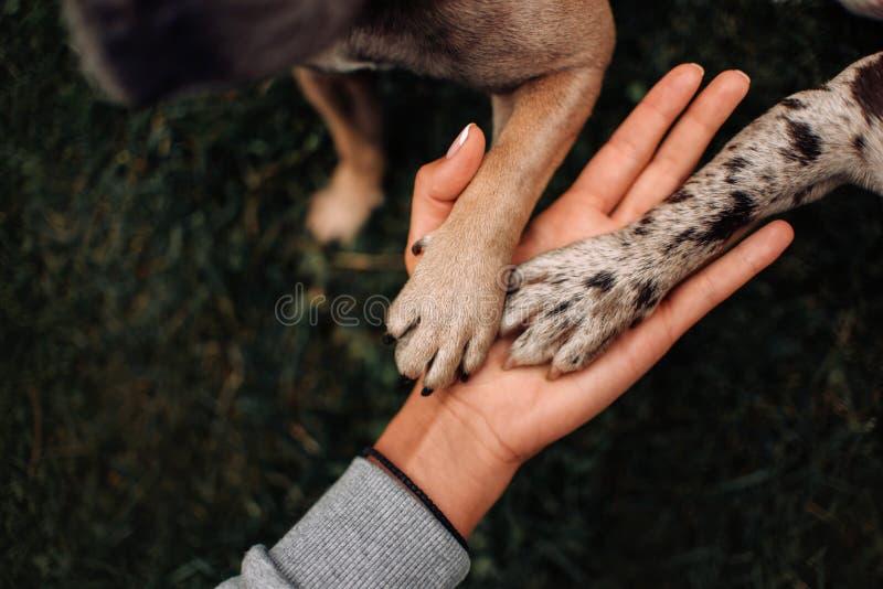 Hundetatzen Bilder