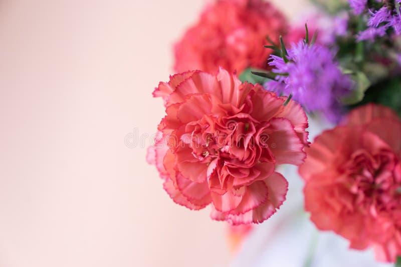 Draufsichtabschluß herauf roten rosa Gartennelkenblumenstrauß mit rosa backgroun stockfotos