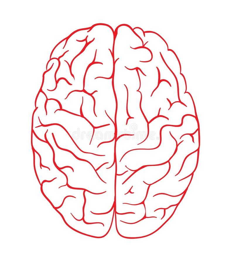 Draufsichtdesignvektorschablone Brain Logo-Schattenbildes Geistesblitz denken Idee Firmenzeichen-Konzeptikone lizenzfreie abbildung