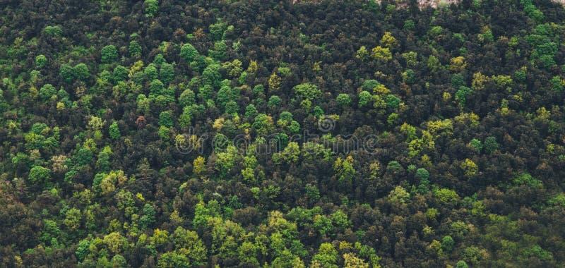 Draufsichtmorgenbergspitzen auf grüner Naturlandschaft Hintergrundberg übersteigt Tal Panoramahorizont-Perspektivenansicht von lizenzfreie stockfotografie