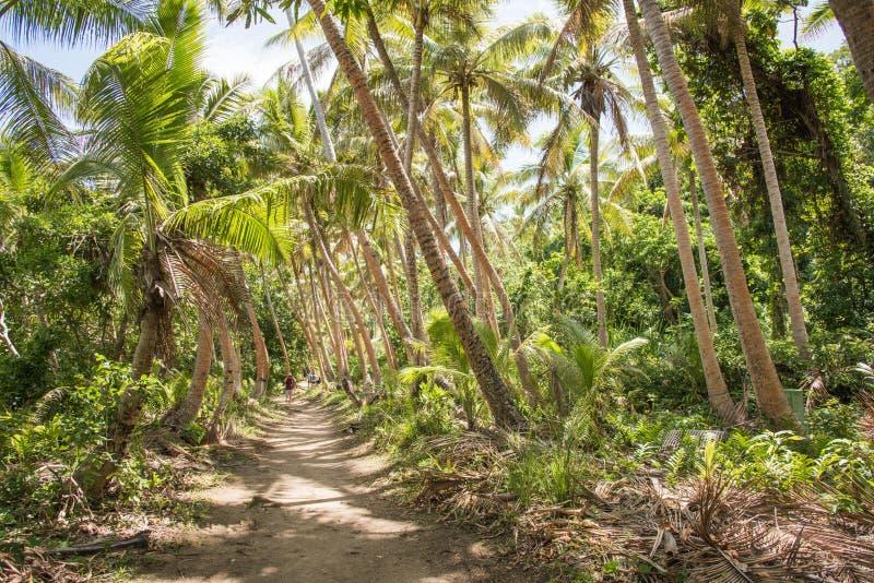 Dravuni wyspa: Tropikalny spacer zdjęcia stock