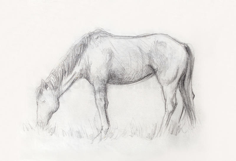 Draw pencil horse on old paper, And old vintage paper structure. Draw pencil horse on old paper, And old vintage paper structure stock illustration