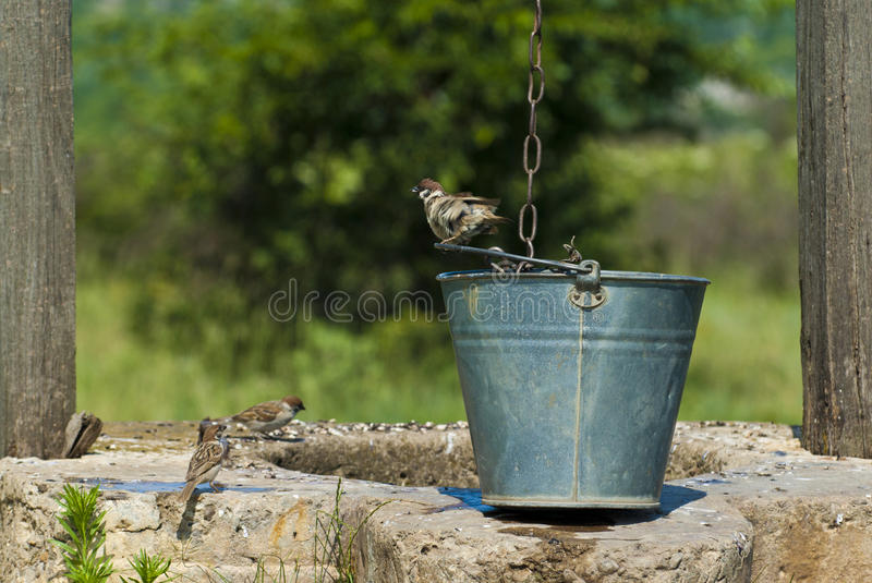 Download Draw-well's birds stock photo. Image of thirst, countryside - 15198650