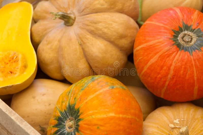 Drawer with variety of fresh pumpkins. Drawer with variety of colorful fresh squashes stock images