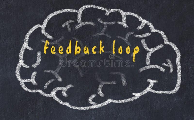 Drawind del cerebro humano en la pizarra con el bucle de retroalimentación de la inscripción stock de ilustración