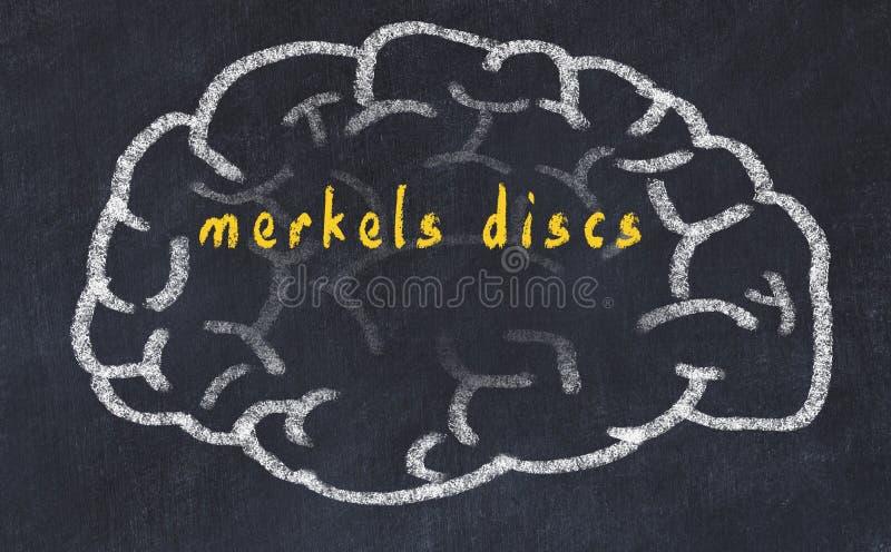 Drawind del cerebro humano en la pizarra con los discos de los merkels de la inscripción ilustración del vector