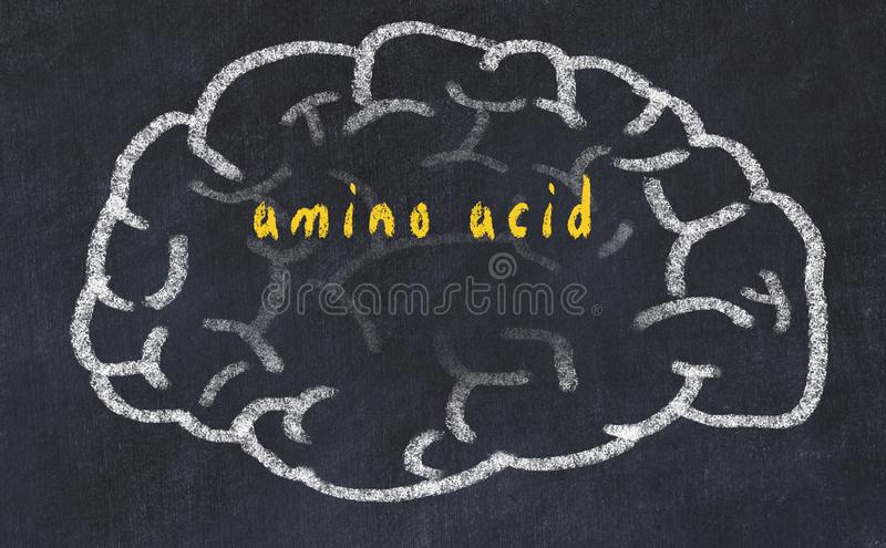 Drawind of human brain on chalkboard with inscription amino acid.  royalty free stock photography