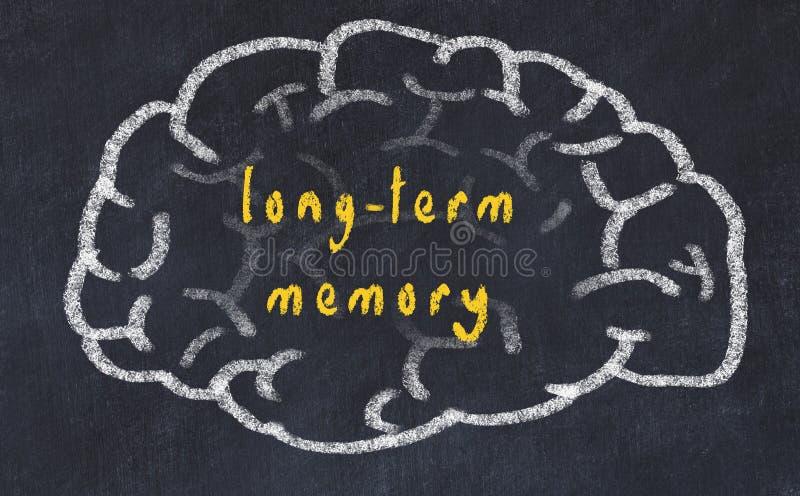 Drawind ludzki mózg na chalkboard z wpisową długookresową pamięcią ilustracja wektor