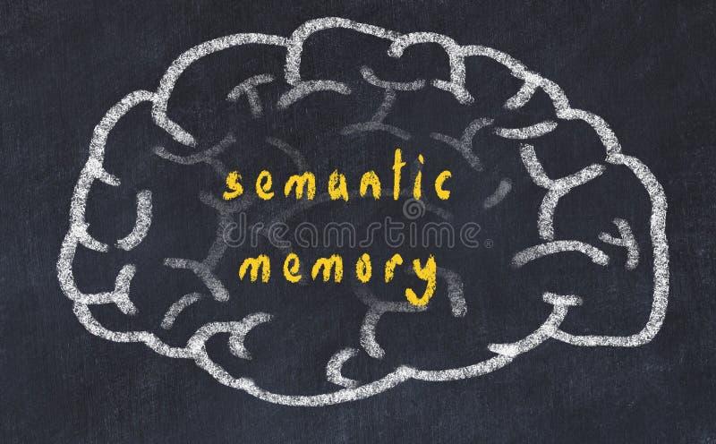 Drawind ludzki mózg na chalkboard z wpisową semantyczną pamięcią ilustracja wektor