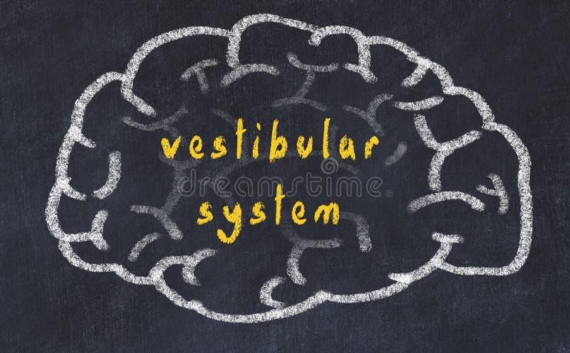 Drawind van menselijke hersenen op bord met inschrijvings vestibulair systeem vector illustratie