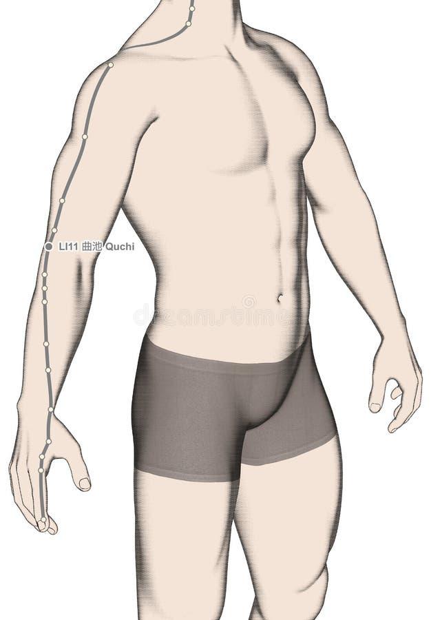 Drawing Acupuncture Point LI11 Quchi, 3D Illustration stock photos