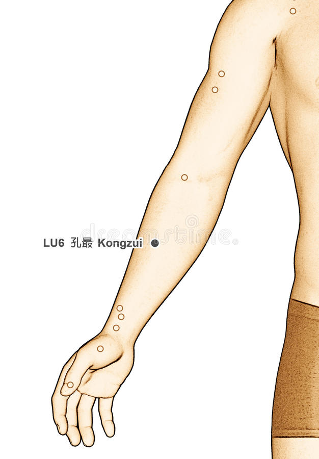Drawing Acupuncture Point LU6 Kongzui, 3D Illustration royalty free stock image