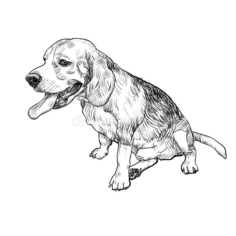 Drawing of adorable male beagle sitting and sticking out tounge stock illustration