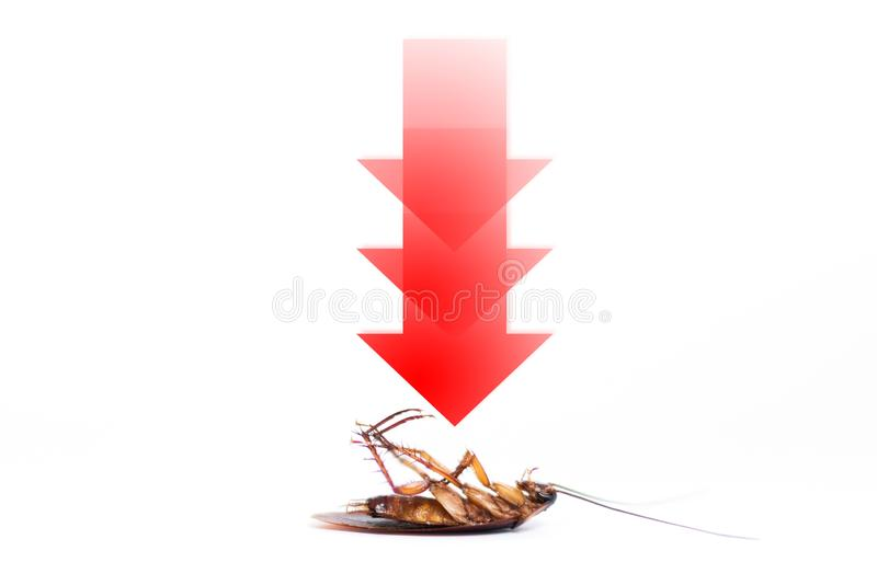 drawing arrow, showing target to kill cockroach stock photography