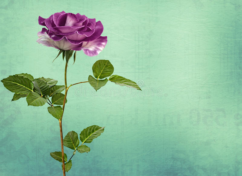 Drawing beautiful bouquets of roses royalty free illustration