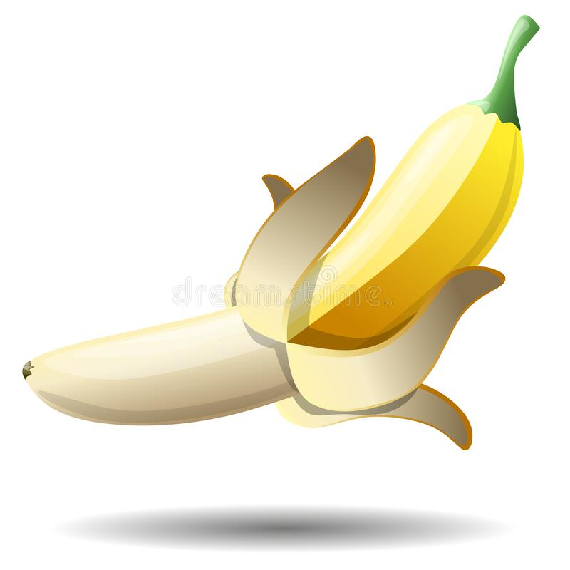 Drawing of a beautiful, ripe banana fruit. Vector illustration isolated. Drawing of a beautiful, ripe banana fruit. Vector illustration isolated on a white vector illustration
