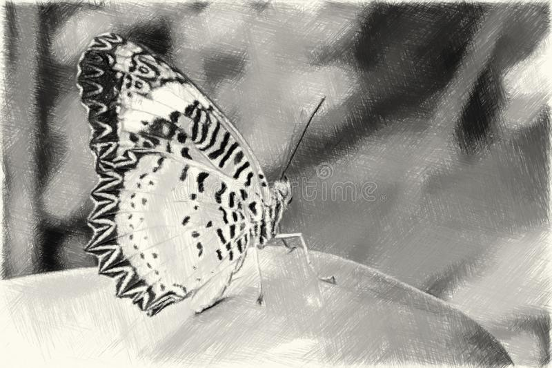 Drawing black and white of butterfly on leaf. Art drawing black and white of butterfly on leaf stock illustration