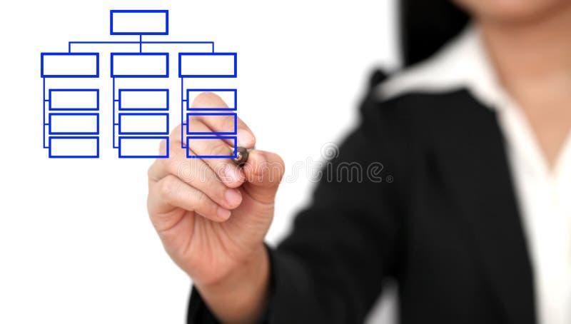 Drawing business organization chart stock photography