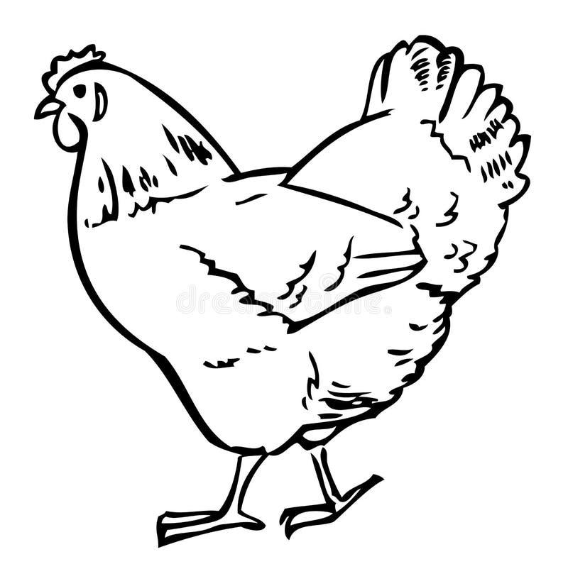 Drawing chicken vector illustration